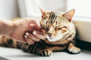 cat eyedrops